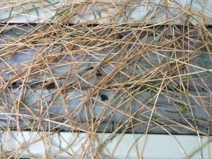 Pine Needles on Gutter Cover