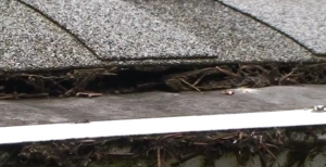 Debris Collecting Under Roof Shingle