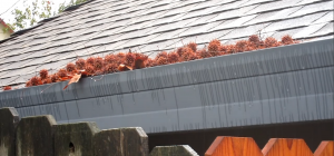 Gutter Guards for Sweet Gum Trees